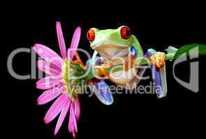 Frosch und Blume
