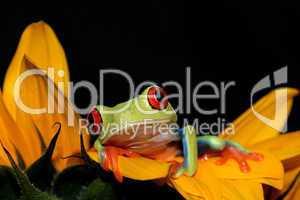 Frosch und Sonnenblume