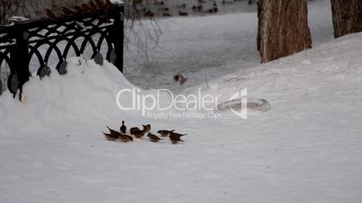 sparrow feed and fly out in winter park