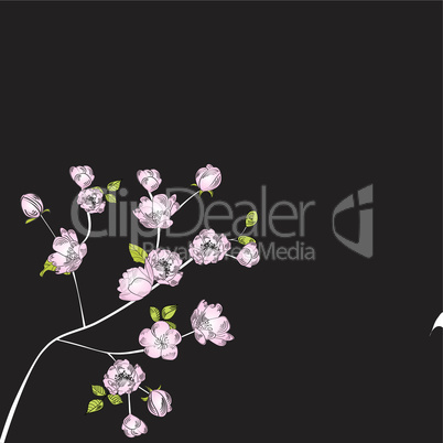 Background with apple flowers