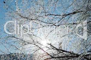 Vereister Baum im Sonnenschein