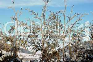 Winterliches Gebüsch im Sonnenschein