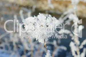 Blume mit Schneemoleküle