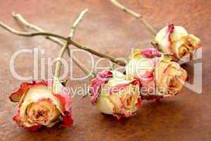 Rosen auf Rost