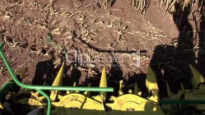 Mais Ernte / Corn Harvest