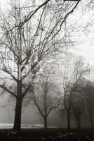 Creepy dark forest and the fog