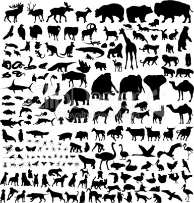 big animals collection