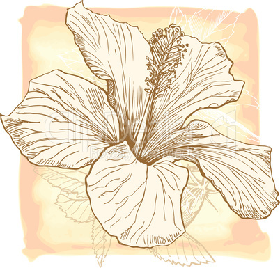 Hibiscus flower - vector watercolor paint