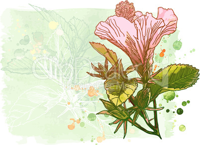Hibiscus flower - vector watercolor paint.