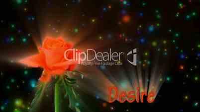 "Orange rose ""Lambada"" color meaning ""Desire"" 3a alpha matte"