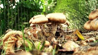 Close-up shot of wild mushrooms