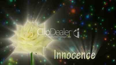"White rose ""Escimo"" color meaning ""Innocence"" 1a alpha matte"