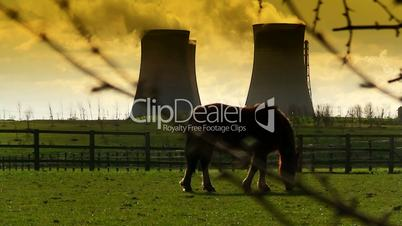 Horse grazing with power station cooling towers in the background