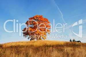 Autumn landscape with a lone tree