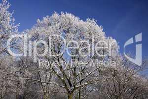 Bäume mit Rauhreif im Winter, Niedersachsen, Deutschland - Trees with hoarfrost in winter, Lower Saxony, Germany, Europe