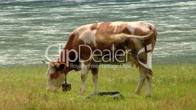 Gebirgslandschaft mit Kühen