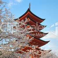 Pagoda With Cherry Trees