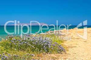 Wildflowers on a background seascape