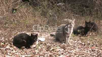 Cats in wild abandoned scared