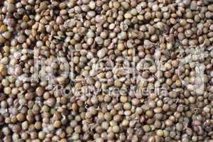 Braune Linsen - Brown Lentils