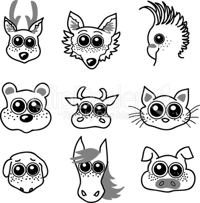 Kulleraugen Tiere
