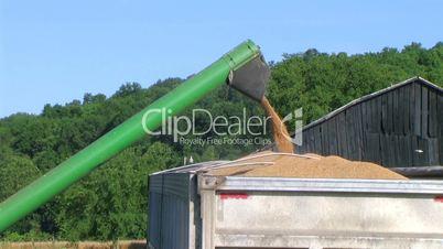 Combine Emptying Wheat 02