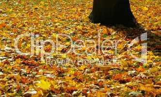 Herbstlaub auf Wiese - fall foliage on meadow 04