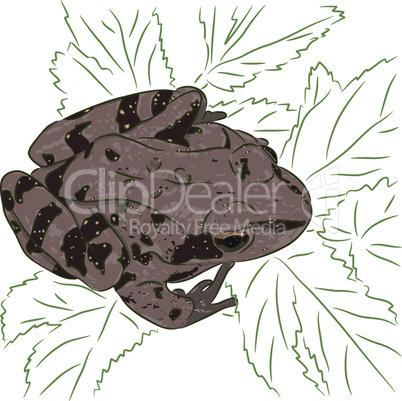 Meadow Frog