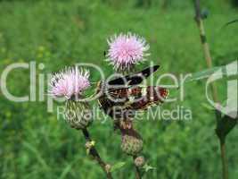 Motley butterfly on flower
