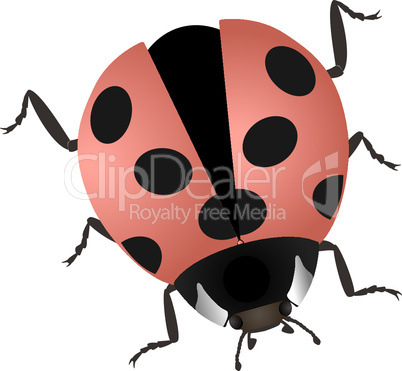 Illustration of a ladybug isolated on white