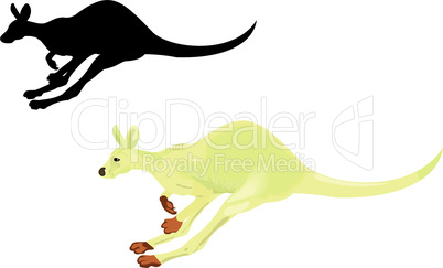 Running kangaroo isolated on a white background