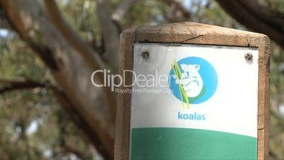 Hinweistafel, Koalabären