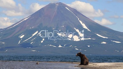 Bear against a volcano