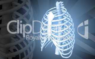 human rib