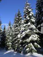 Winterwald / Winter Forest