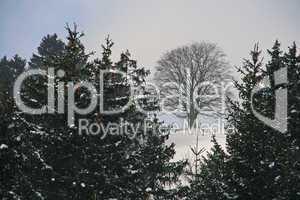 Laub- und Nadelbäume im Winter