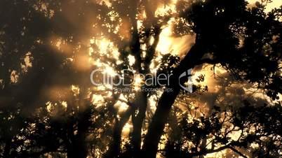 Baum mit Lichteinfall