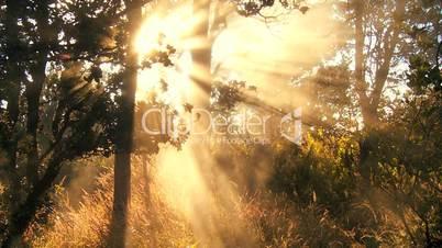 Wald mit Sonne und Rauch