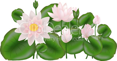 Group Lotuses with leavesGroup Lotuses with leaves