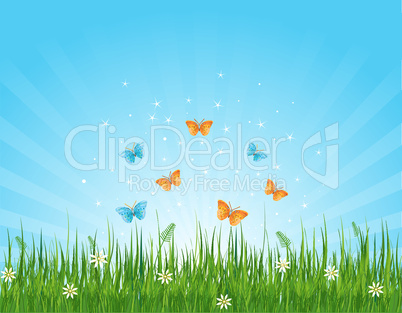 Grassy field and butterflies