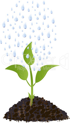 Green Young plant with rain drops