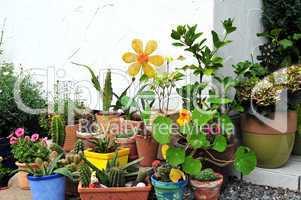 Blumentöpfe