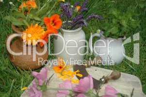 Kräuter und Heilpflanzen