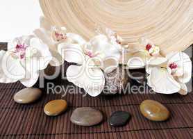 Steine und Orchideen