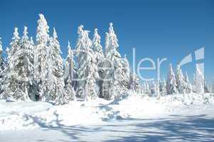 Schnee in den Bergen im Winter