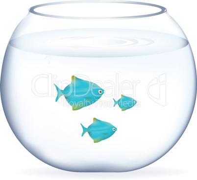 Blue Fishes In Aquarium