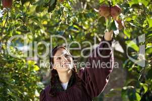 Woman picking the apples
