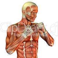 Muskelaufbau sportlicher männlicher Oberkörper