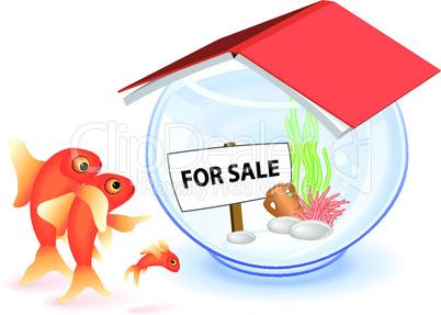 Goldfisch zu verkaufen
