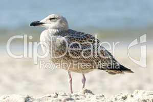 Vogel am Strand